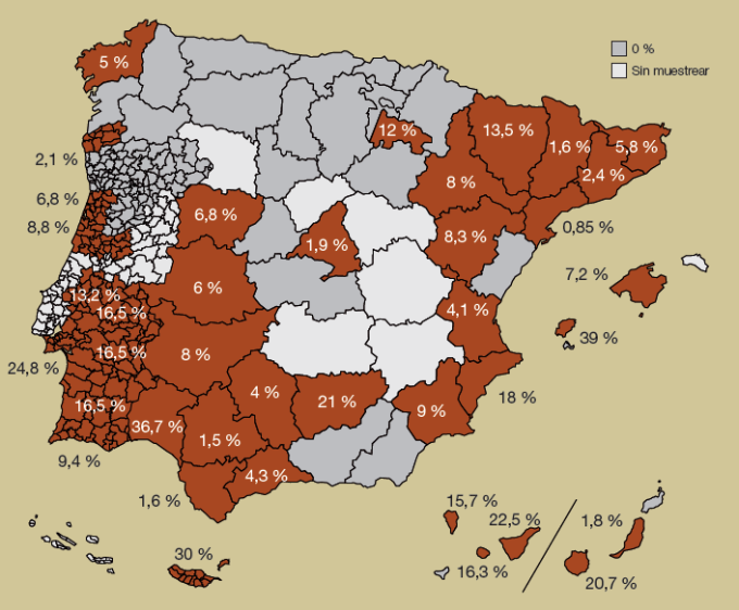 dirofilaria España